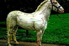 DIFT - Pferdephysiotherapie