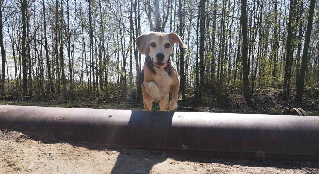 Hundephysiotherapeut